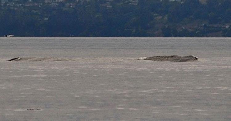 Captan en video a monstruo legendario acuático en lago de Canadá