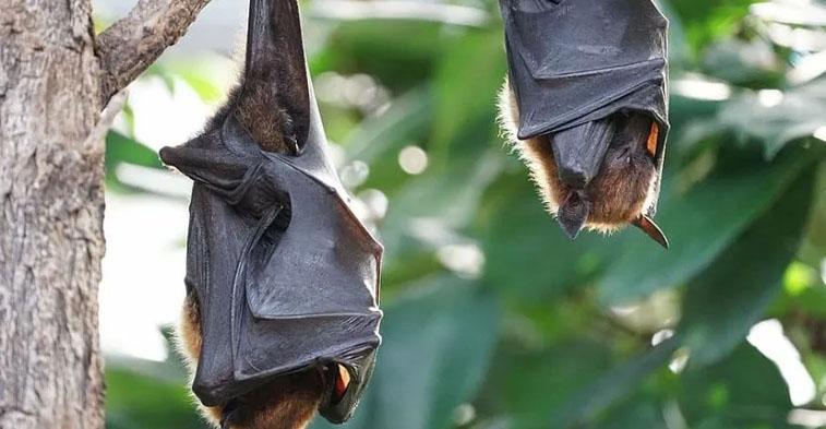 Reabren mercados en China donde venden y comen murciélagos