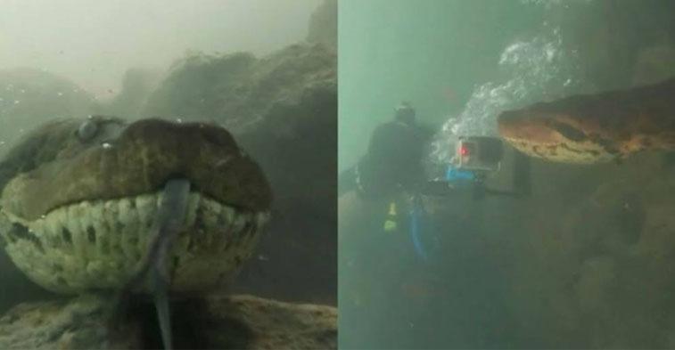 Encuentro entre buzo y anaconda de 7 metros sorprende en las redes sociales